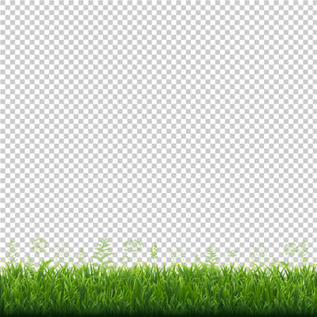 Green Grass Frame Transparent Background, Vector Illustration Stock Vector - 124948604