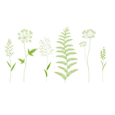 Grass Set Isolated, Vector Illustration Stock Vector - 124948606