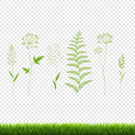 Green Grass Set Isolated Transparent Background, Vector Illustration