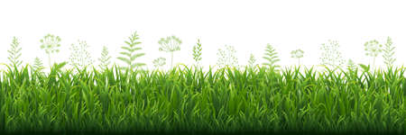 Green Grass Border With White background, Vector Illustration