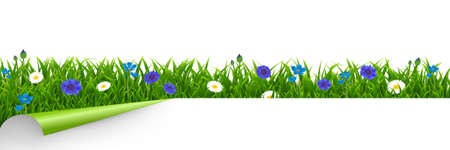 Grass And Blue Flowers Border White Background With Gradient Mesh, Vector Illustration
