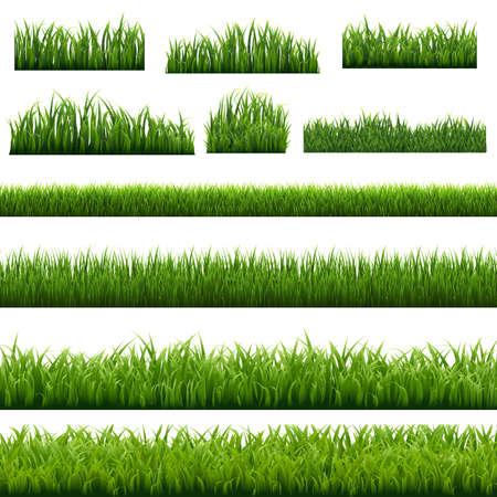 Big Set Green Grass Borders Background White Background, Vector Illustration