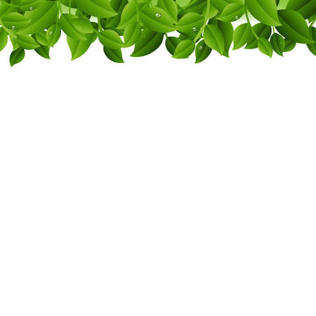 Tree Branches Isolated White Background With Gradient Mesh, Vector Illustration