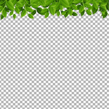 Tree Branches Isolated  With Gradient Mesh, Vector Illustration Illustration