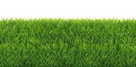 Green Grass Frame, Vector Illustration Illustration