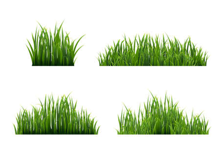 Grass Border With White Background, Vector Illustration