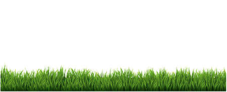 Green Grass Border With White Background, Vector Illustration Illustration