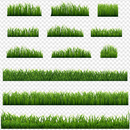 Green Grass Frame Isolated Transparent background, Vector Illustration