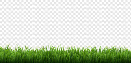 Green Grass Border Isolated Transparent Background, Vector Illustration