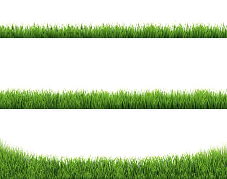 Green Grass Border Collection And White Background With Gradient Mesh, Vector Illustration