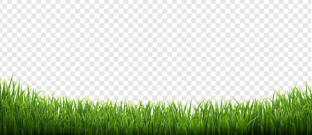 Green Grass Isolated Transparent Background With Gradient Mesh, Vector Illustration Ilustração