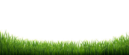 Green Grass Isolated White Background With Gradient Mesh, Vector Illustration Ilustração