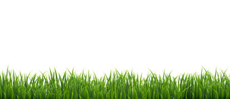 Green Grass Isolated White Background, Vector Illustration With Gradient Mesh, Vector Illustration