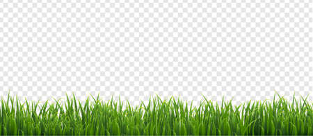 Green Grass Isolated Transparent Background, Vector Illustration