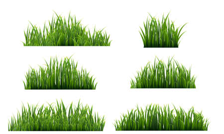 Green Grass Isolated White Background, Vector Illustration