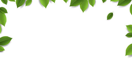 Green Leaves Frame With White Background With Gradient Mesh, Vector Illustration