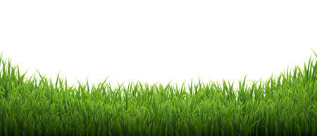 Green Grass Isolated White Background With Gradient Mesh, Vector Illustration Banco de Imagens