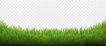 Green Grass Isolated Transparent Background With Gradient Mesh, Vector Illustration Banco de Imagens