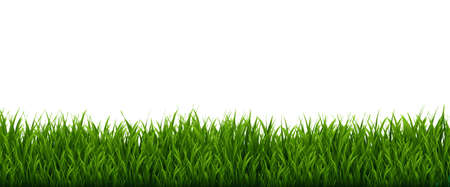 Green Grass Frame And Isolated White Background, Vector Illustration