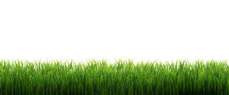 Green Grass Frame Isolated White Background, Vector Illustration