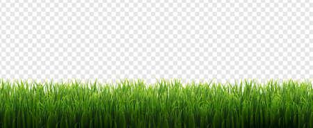 Grass Frame Isolated Transparent Background, Vector Illustration Ilustração