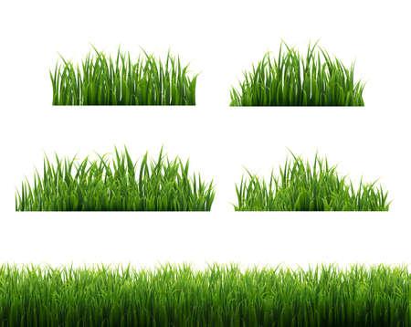Green Grass Frames White Background, Vector Illustration Ilustração