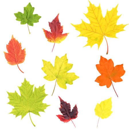 Autumn Leaves Set Isolated White Background, Vector Illustration Banco de Imagens - 155038608