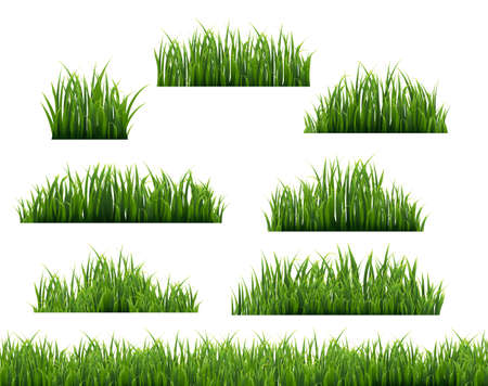 Green Grass Frame White Background, Vector Illustration