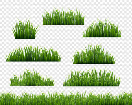 Green Grass Frame Transparent Background, Vector Illustration