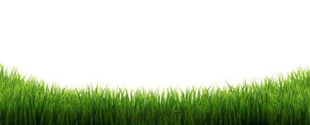 Green Grass Border Isolated White Background, Vector Illustration