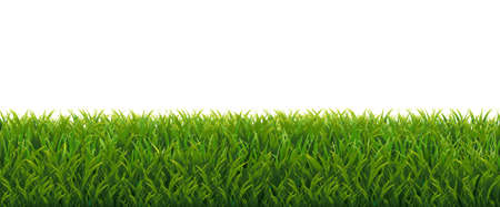 Green Grass Border With White Background, Vector Illustration Ilustração