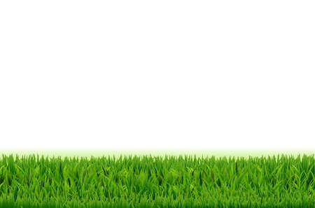 Grass Frame, With Gradient Mesh, Vector Illustration