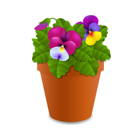 Flower Pansy With Gradient Mesh, Vector Illustration