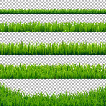 Green Grass Borders Collection, Isolated on Transparent Background, Vector Illustration