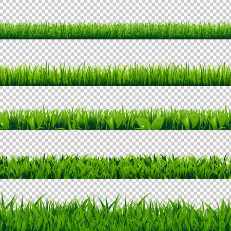 Grass Border Big Set, Isolated on Transparent Background, Vector Illustration