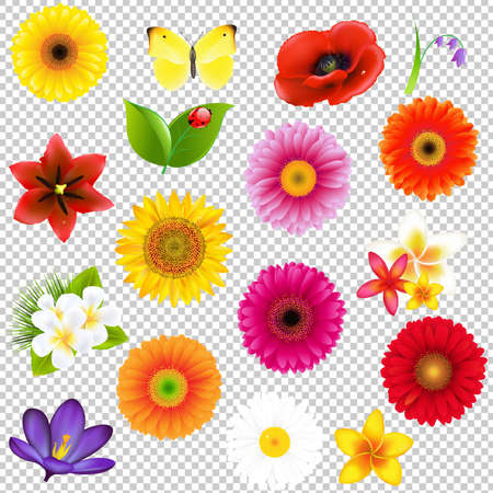 Big Flowers And Leaf Set, Isolated on Transparent Background, With Gradient Mesh, Vector Illustration