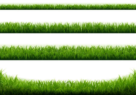 Green Grass Border With White Background With Gradient Mesh, Vector Illustration Vettoriali