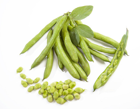 pods: fresh broad beans and pods freshly picked