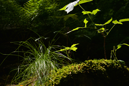 odour: Undergrowth in backlight