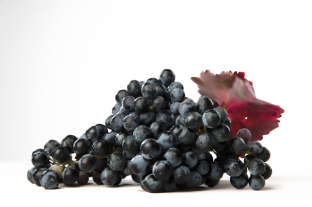 lambrusco: bunch of black grapes on white background