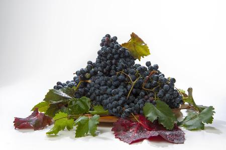 lambrusco: grape heap black variety Stock Photo