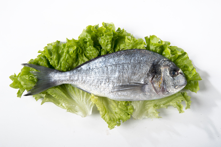 Fresh sea bream on a bed of salad with white background