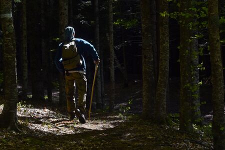 Lonely man walking in forest with backpack and stick