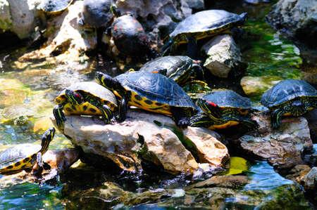 sliders: Pond sliders