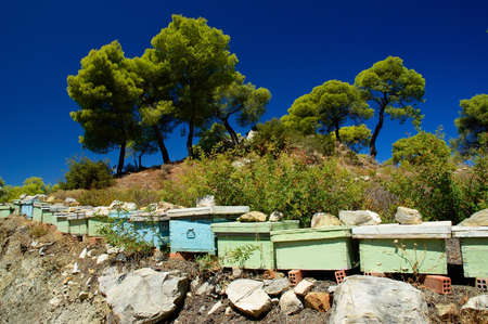 poros: Poros Island , Greece . Bee hives in a Pine forest