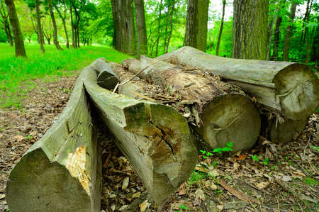 oxygene: a natural quiet park with old cut trees  lying in the foreground Stock Photo