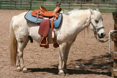 White pony waiting in corral for next rider. Reklamní fotografie