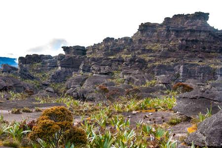 Limestones structures on the summit of Roraima Table Mountain, Great Savanna, Canaima National Park, Venezuela