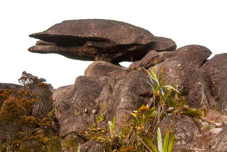 Limestones structures in turtle shape on the summit of Roraima Table Mountain, Great Savanna, Canaima National Park, Venezuela