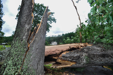 Fallen Tree Hit by Lightning After a Hurricane
